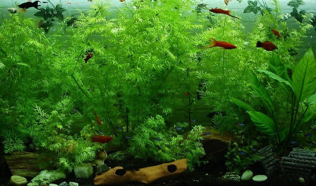 houseplants you can use in a fish tank