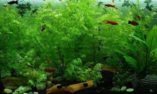 Popular houseplants you can use in a fish tank