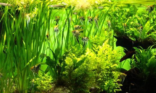 Popular houseplants you can use in an aquarium