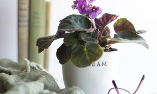 17 of the best houseplants that stay small