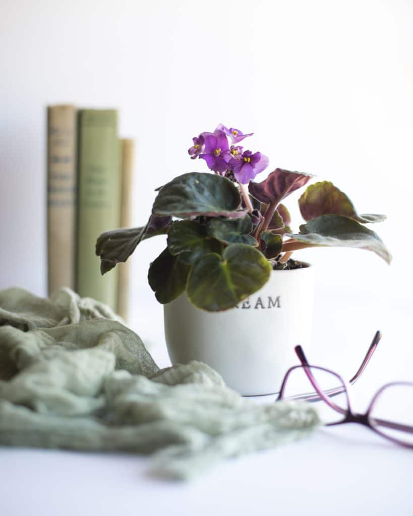 Houseplants that stay small