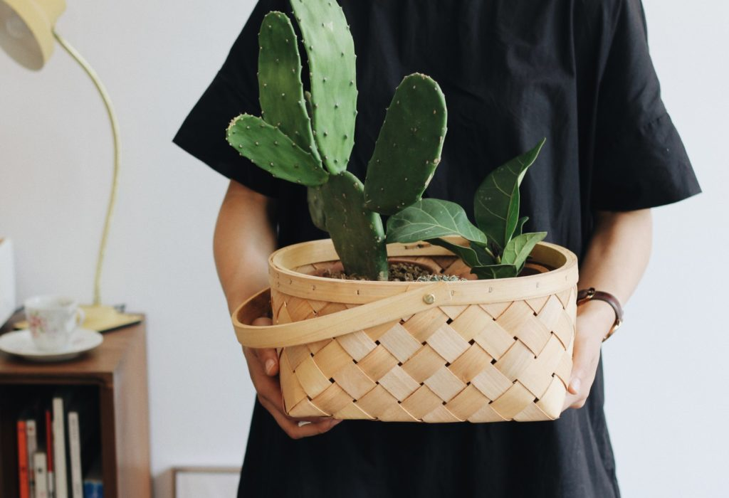 Prickly pear cactus houseplants cats will not eat