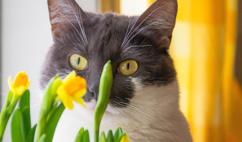 find out which houseplants are unsafe for cats