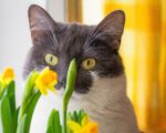 Watch out! These popular houseplants are unsafe for cats