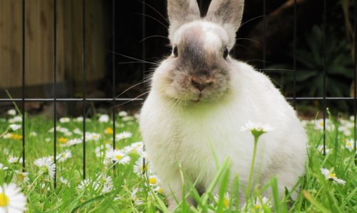 Watch out! These houseplants are poisonous to rabbits