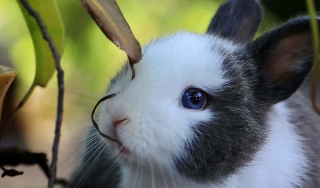 these houseplants are safe for bunnies