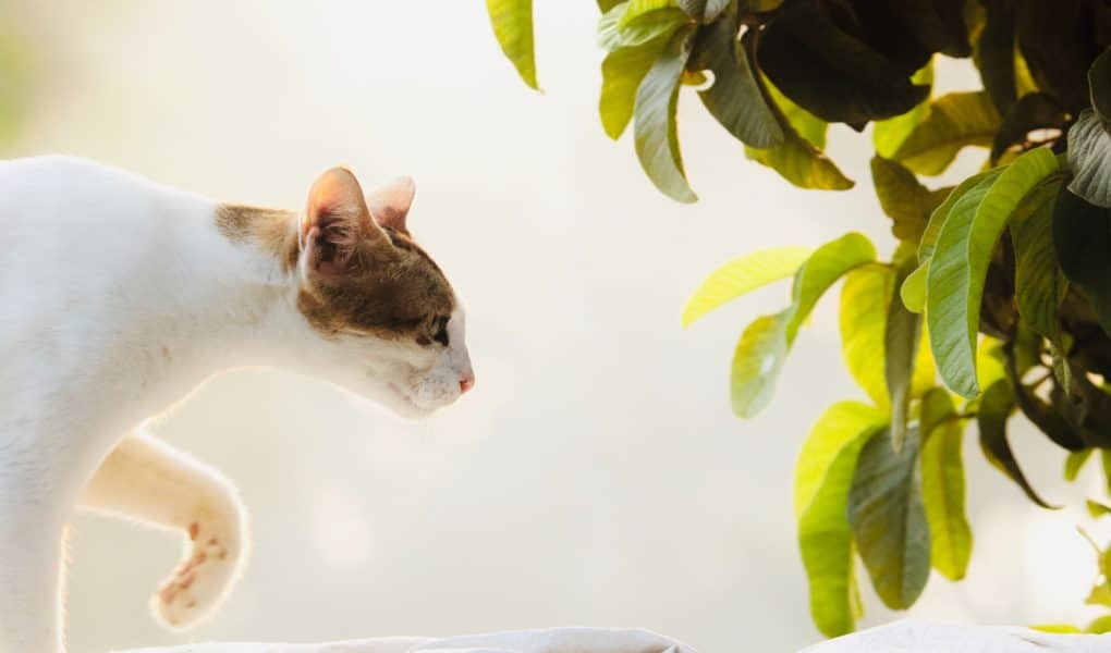 Find out which houseplants are bad for cats