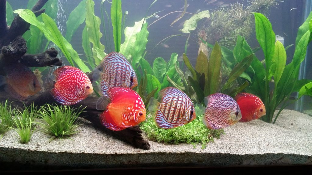 What houseplants you can use in your aquarium