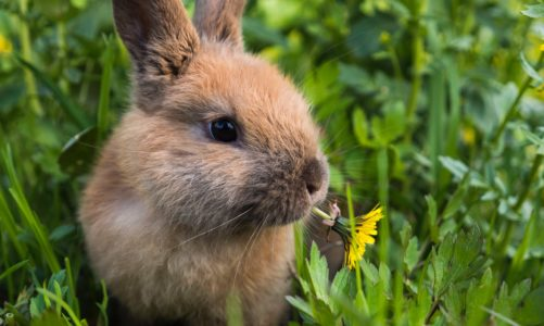 Watch out! These houseplants are toxic to rabbits