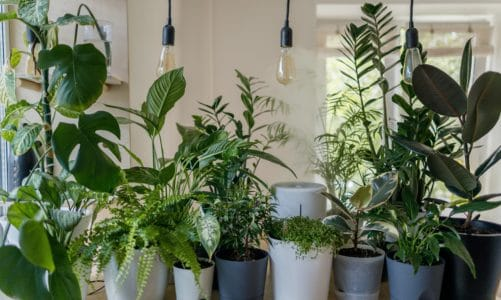 Which houseplants require no light?