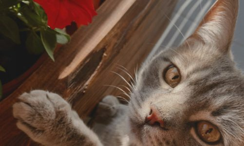 These popular houseplants cats do not like